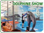 Dolphine Show Package