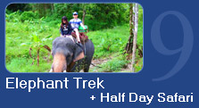 Elephant Trek + Half Day Safari