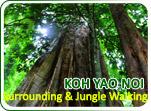 Koh Yao Noi Surrounding and Jungle Walking